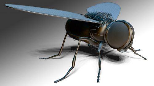 """ZBrush Online Course Sculpting and Modelling """"The Fly"""""""