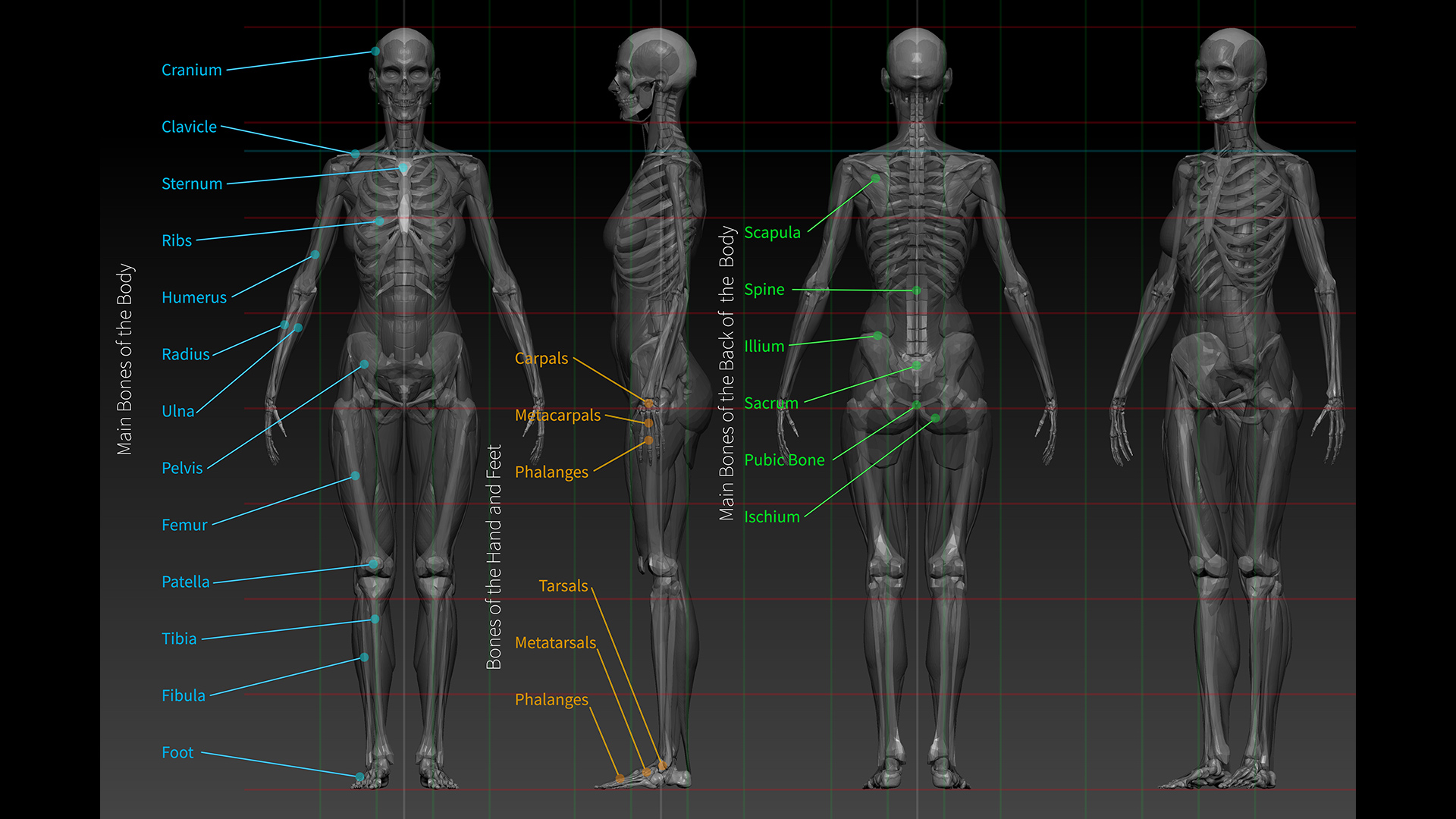 ZBrush Character and Anatomy Course