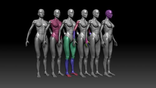 Training your eye – ZBrush Anatomy and Character Creation Course