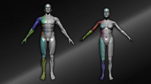 Starting simple in anatomy – ZBrush Anatomy and Character Creation Course